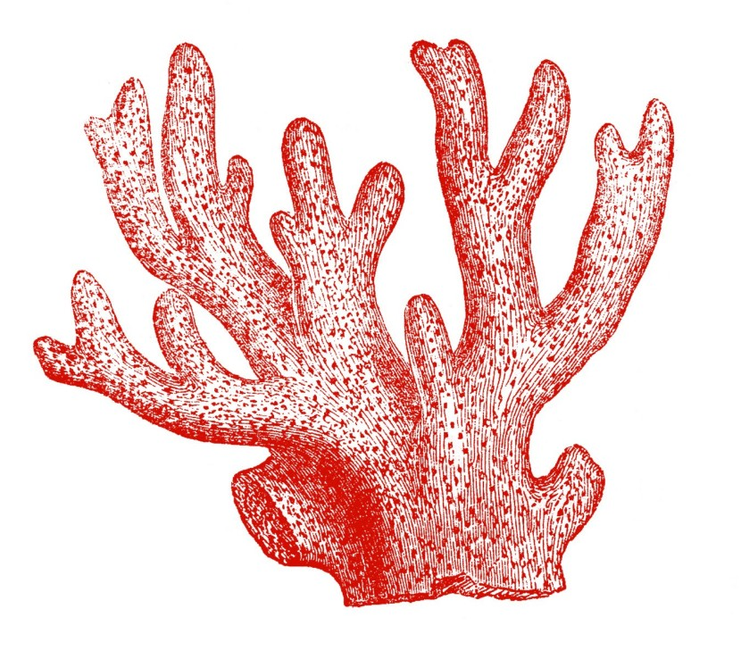 Coral Clipart Free Clip Art Images