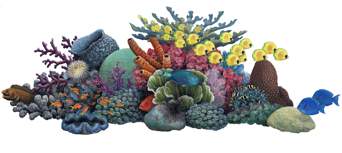 Coral Reef Clipart #15982