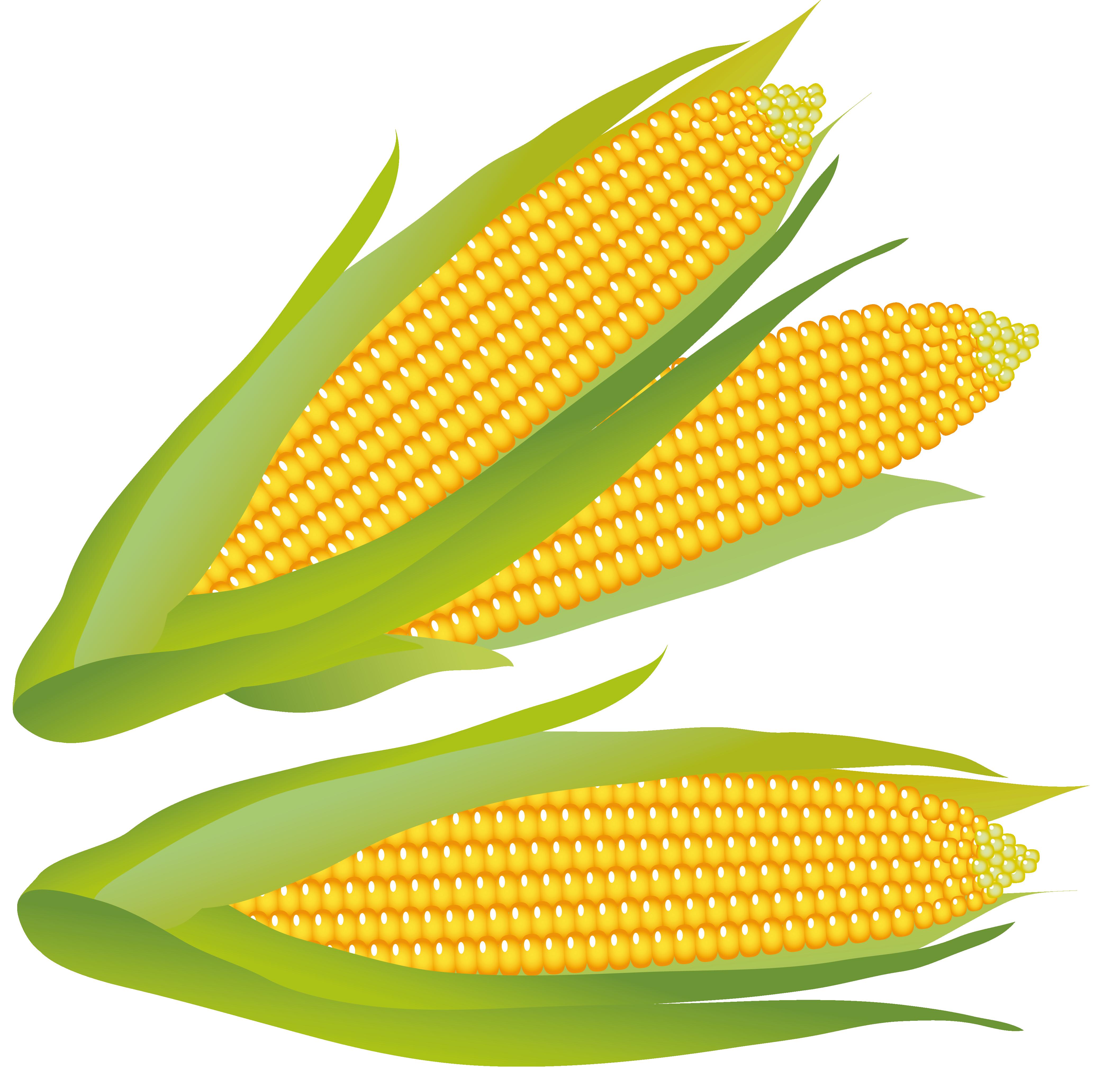 corn clipart