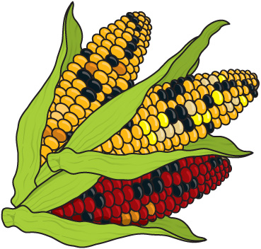 ... Corn Clip Art - clipartal - Indian Corn Clipart