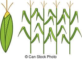Corn Clip Artby TIMURA12/1,182; Corn - F-Corn Clip Artby TIMURA12/1,182; Corn - Four corn stalks and a corn cob.-16