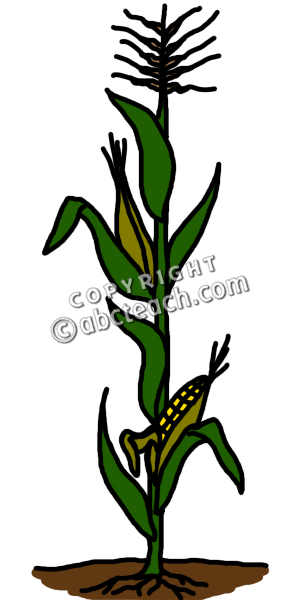 Corn Clipart Colouring Pages