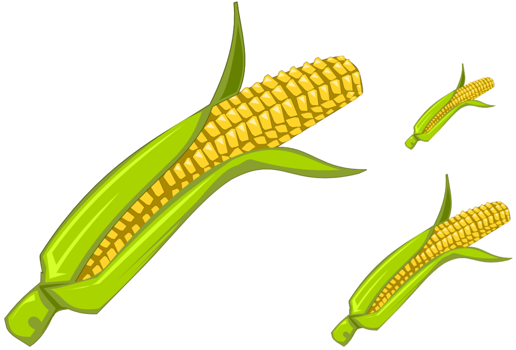 Corn - Clipart by Vyoma ClipartLook.com