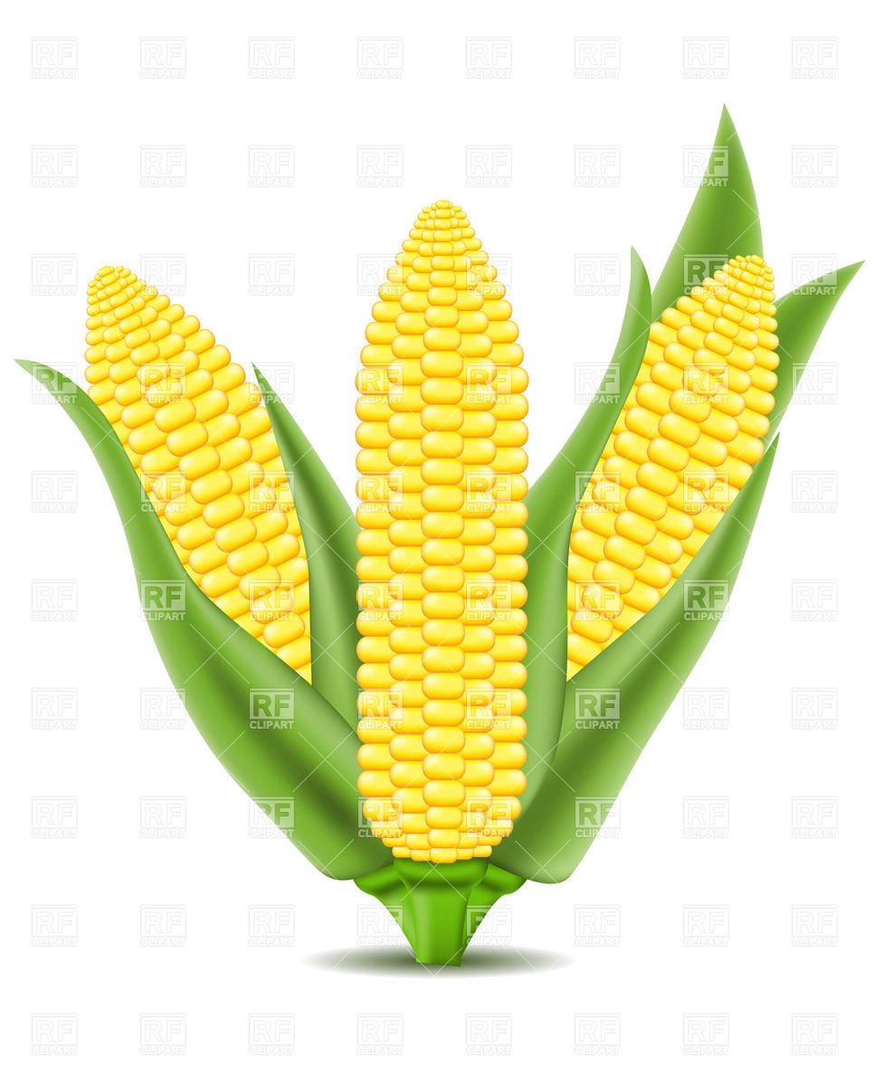 Corn on the cob Royalty Free Vector Clip Art