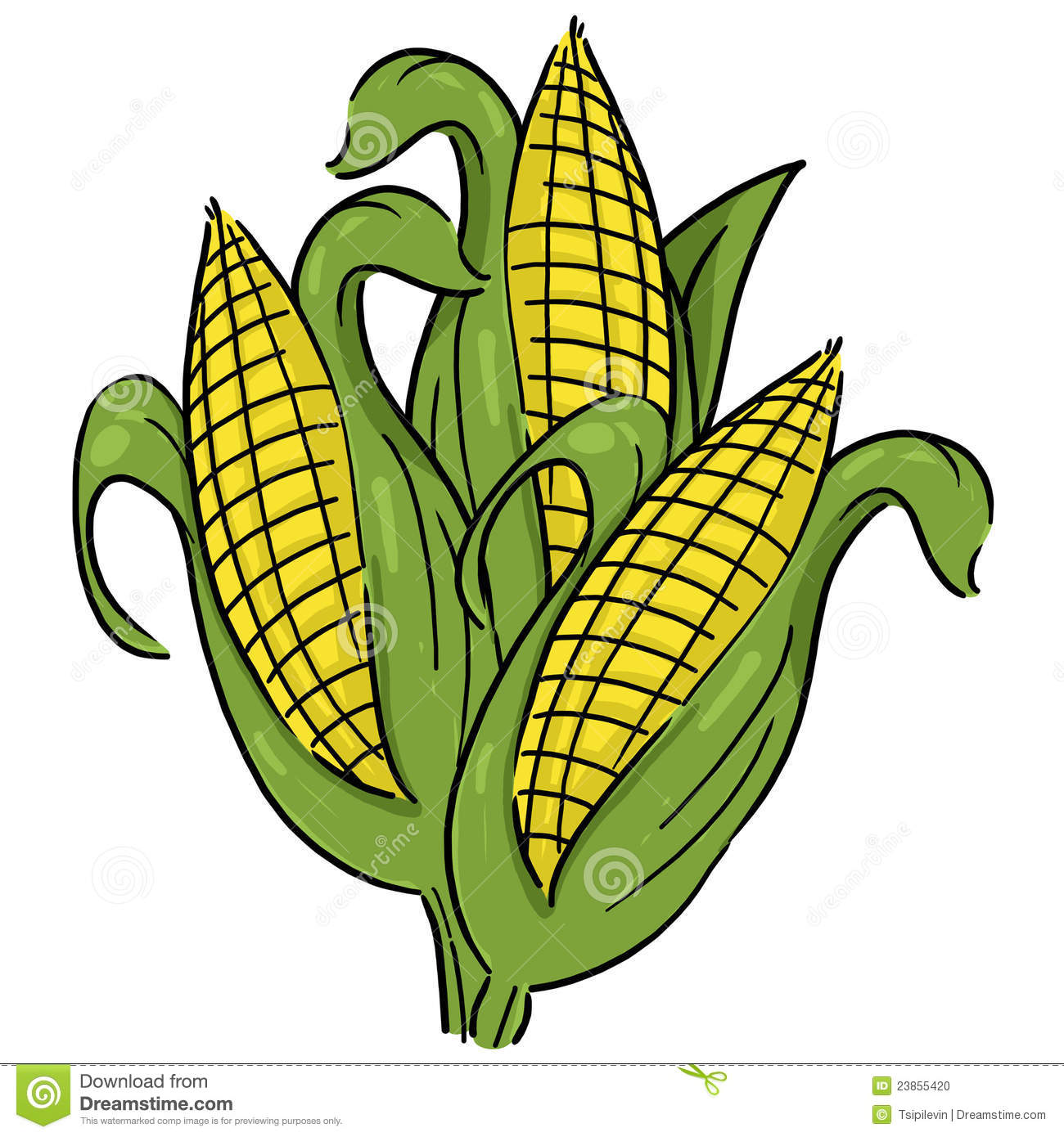 Corn Crops Clipart Ears Of Corn Illustration