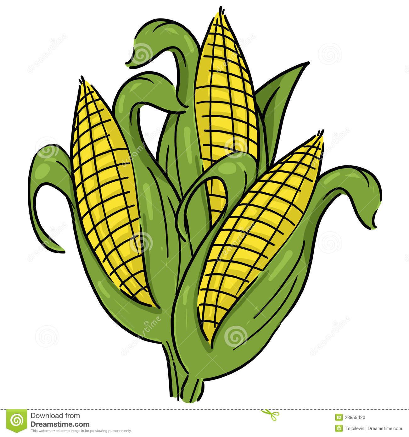 Corn Crops Clipart Ears Of Corn Illustra-Corn Crops Clipart Ears Of Corn Illustration-12