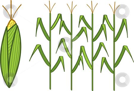 Corn Graphics Clipart - Corn Stalk Clip Art