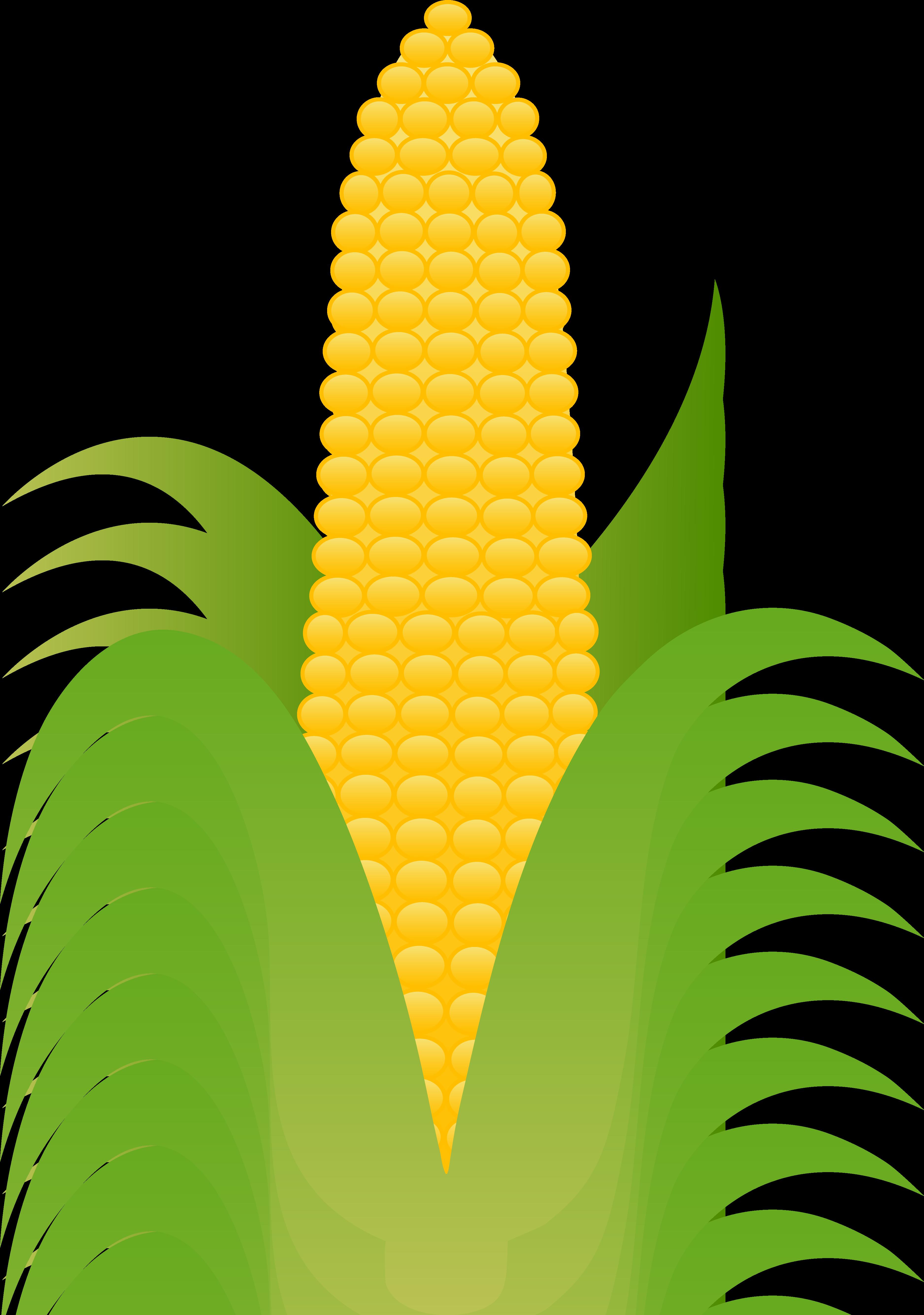 Corn Husk Clipart-Corn Husk Clipart-6