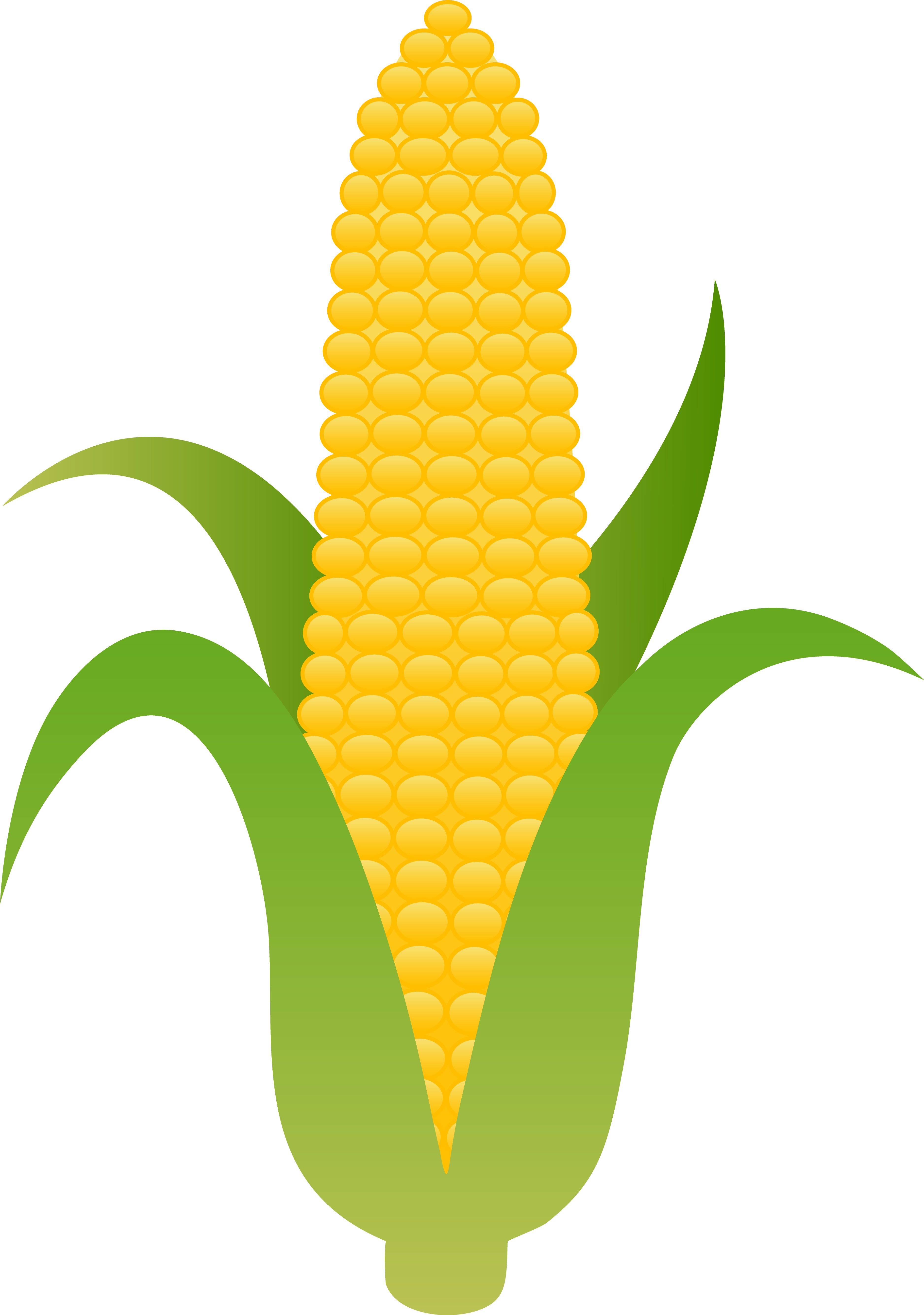 Corn Husk Clipart