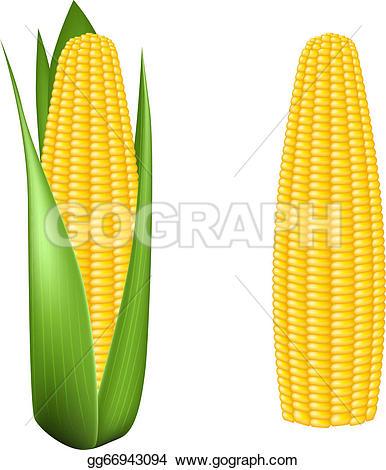 Corn U0026middot; Corn Cob With Green Le-Corn u0026middot; Corn cob with green leaves-9