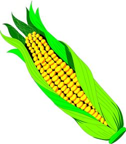 Corn on the cob clipart - Clipartix