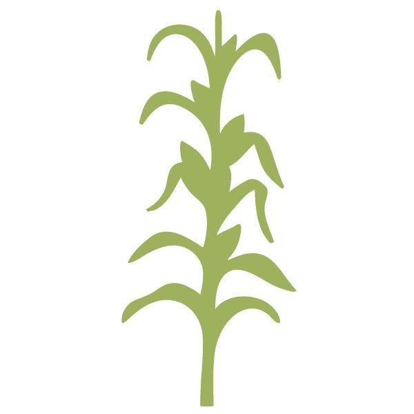 Corn Stalk Clipart