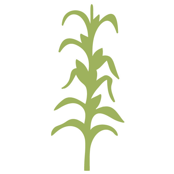 Corn Stalk Clipart