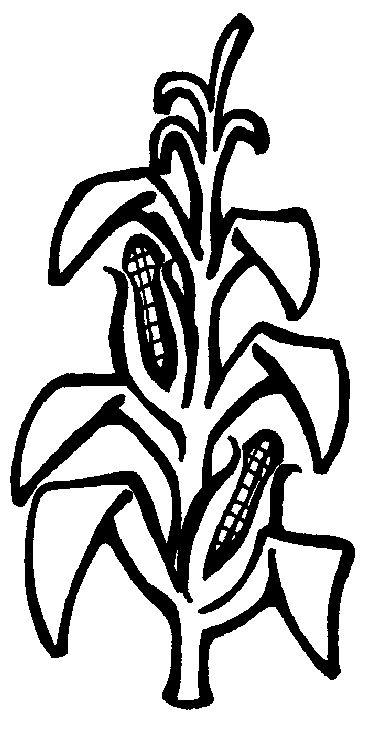 corn stalk clipart - Google .