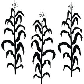Corn Stalk More Than Vinyl
