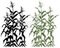 Corn stalk with corn clipart - ClipartFest
