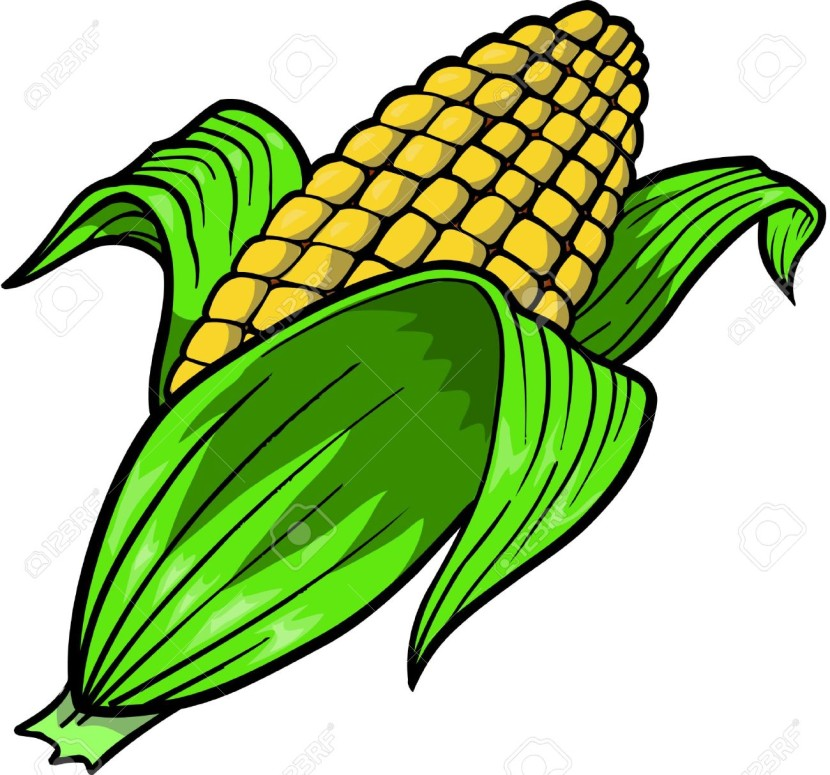 Corn Vector Illustration Stock Illustrat-Corn Vector Illustration Stock Illustrations Cliparts And Royalty-8