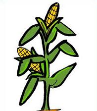 Cartoon Corn Stalk Free Clipa