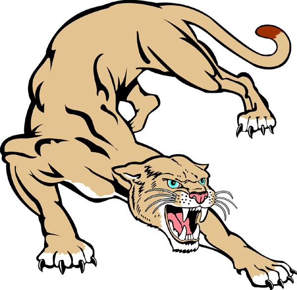 Cougar Mascot   Cougar Drawing Mascot Co-cougar mascot   Cougar Drawing Mascot Cougar team mascot color vinyl-8
