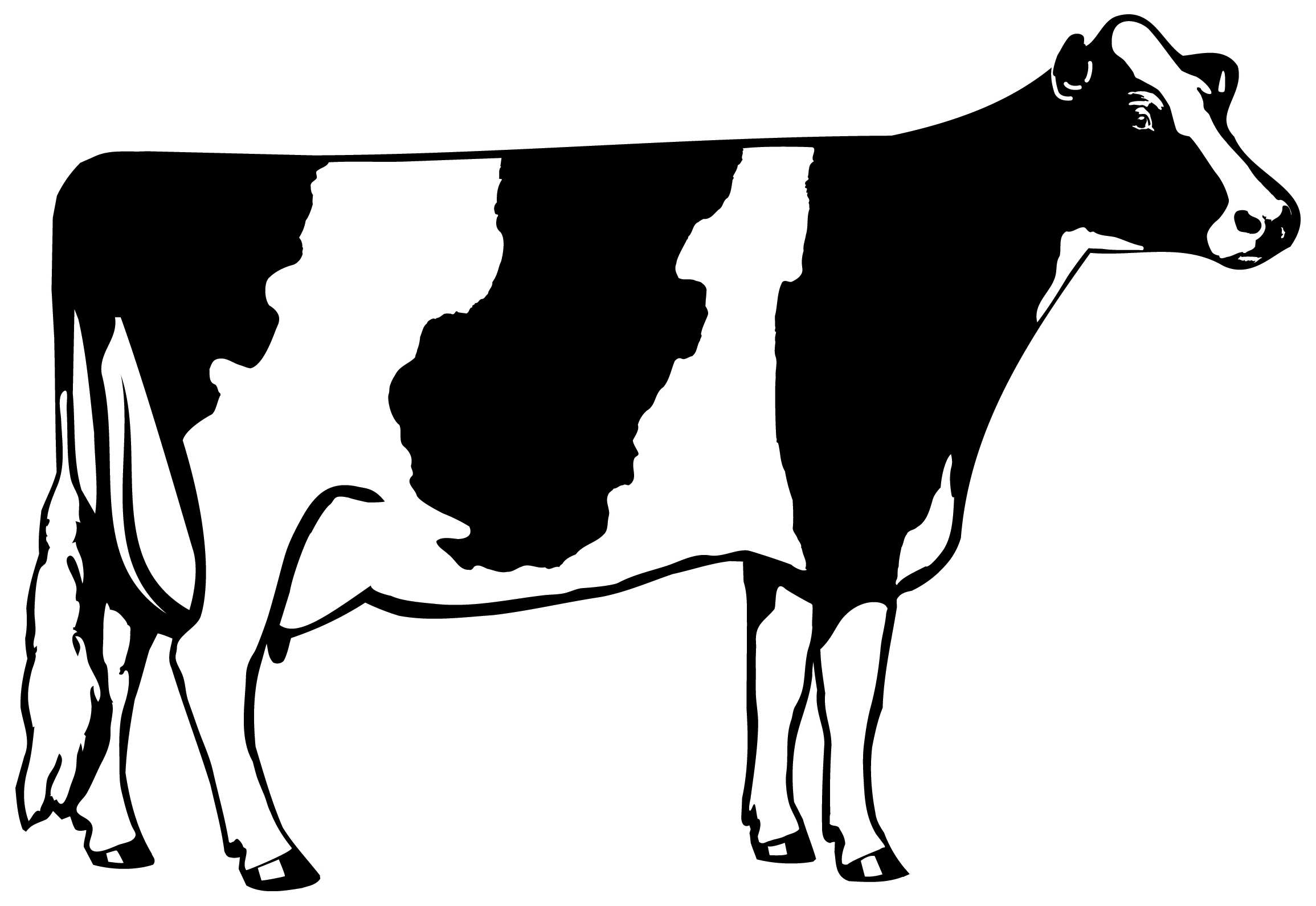 5+ Cow Clipart Black And White | ClipartLook