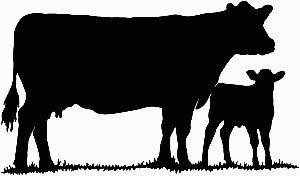 Cow, Cattle And Decals On .-Cow, Cattle and Decals on .-6