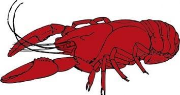 Crayfish Clip Art-Crayfish clip art-15