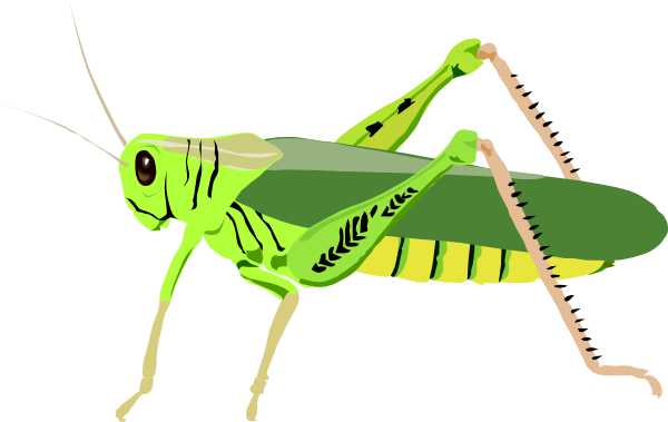 Cricket Insect Clipart Cricket Insect Clip Art