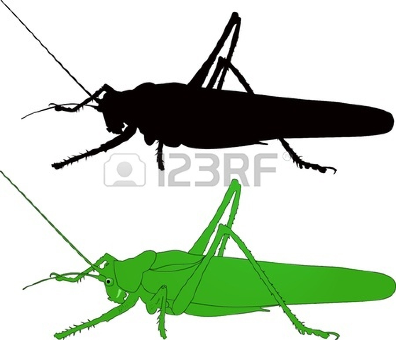 Cricket Insect Clipart