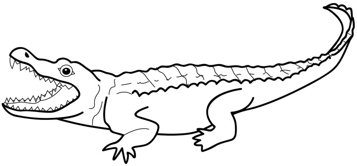 Crocodile clipart cliparts for you