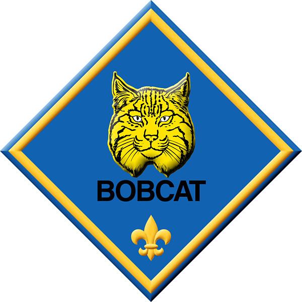 Cub scout bobcat clipart kid