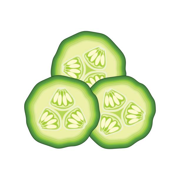 slices of green cucumber on white background. vector illustration vector  art illustration