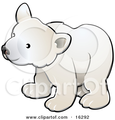 Curious White Arctic Polar Bear Cub Ursus Maritimus by AtStockIllustration