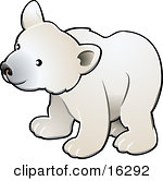 Curious White Arctic Polar Bear Cub Ursus Maritimus Clipart Illustration Image