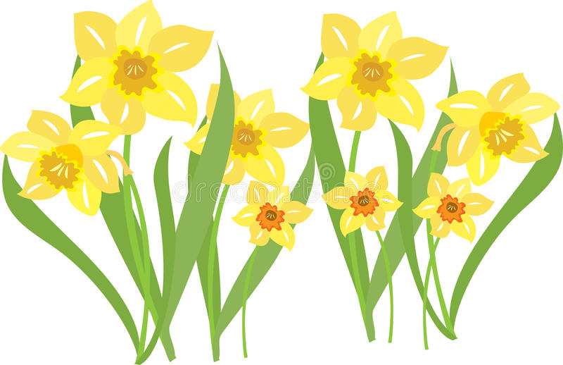 An Illustration Of Daffodils Swaying In -An illustration of daffodils swaying in the breeze-1