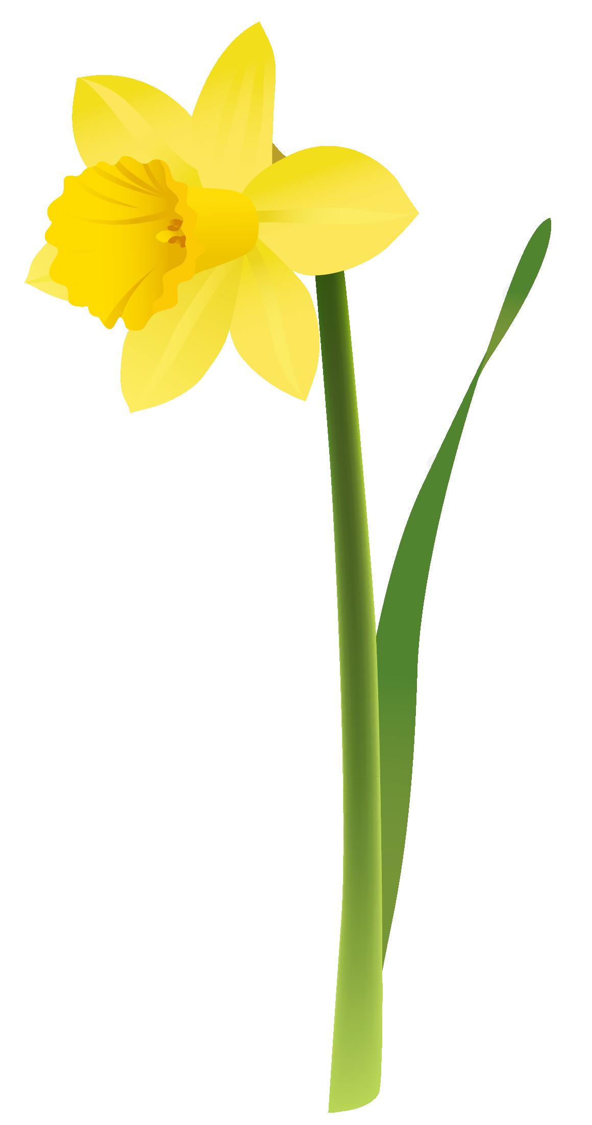 Clip Art · Yellow Daffodils Clipart-Clip art · Yellow Daffodils Clipart-3