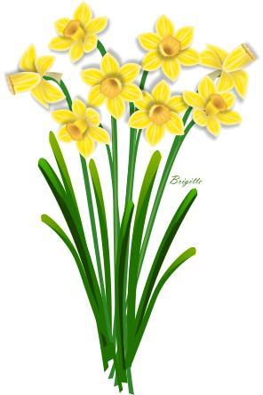 Clipart Daffodil By Brigitte.-Clipart Daffodil by Brigitte.-4