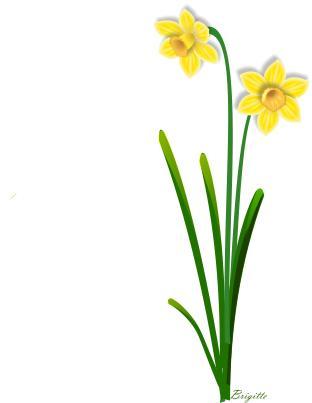 Clipart Daffodil By Brigitte.-Clipart Daffodil by Brigitte.-5