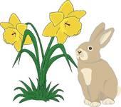 Daffodils; Bunny With Daffodils-Daffodils; Bunny with daffodils-10