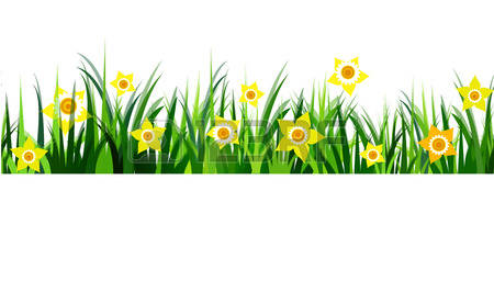 Green Grass Seamless Daffodils Isolated -Green Grass seamless daffodils isolated clip art on white Vector-12