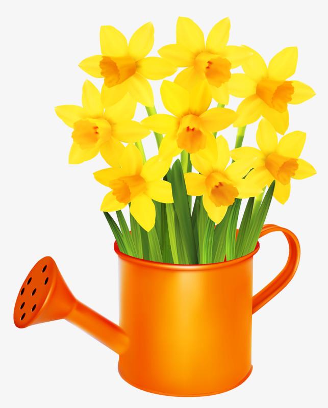 Yellow Daffodils, Yellow, Flowers, Narci-yellow daffodils, Yellow, Flowers, Narcissus PNG Image and Clipart-15