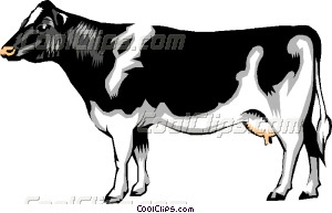 Dairy Cow-Dairy cow-8