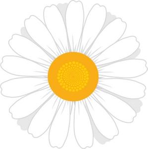 Daisy Clipart Image White Daisy Flower