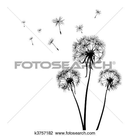 Dandelions-dandelions-10