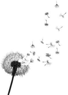 Dandelions. PROJECT / Clip Art-Dandelions. PROJECT / clip art-8