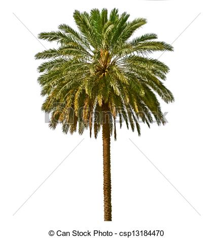 Date Palm Clipart-Clipartlook.com-420