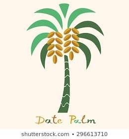 date palm clipart 3