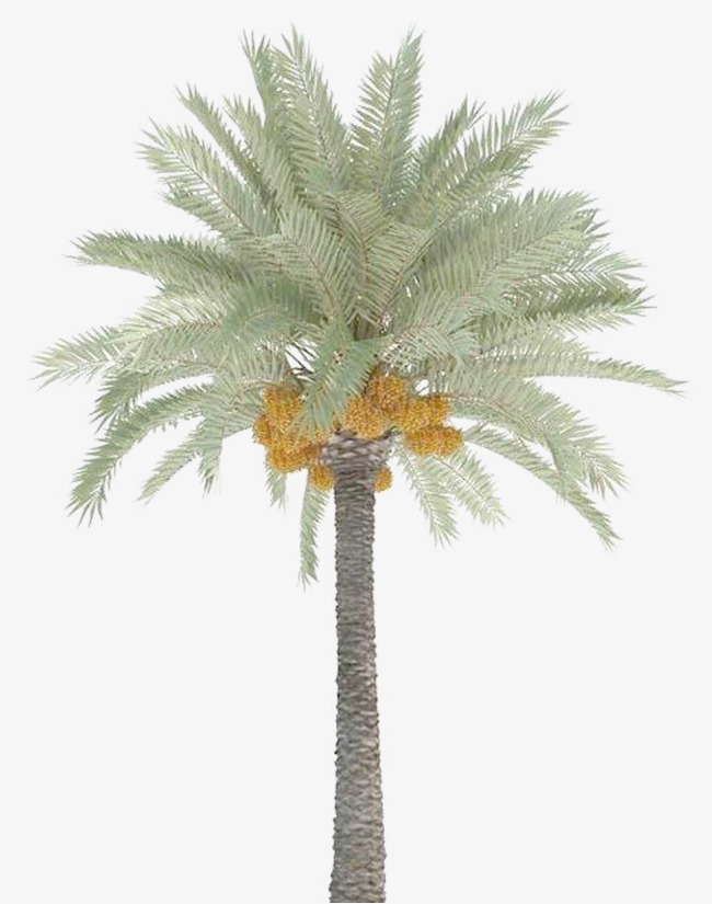 date palm trees, Plant, Trees, Plants PNG Image and Clipart