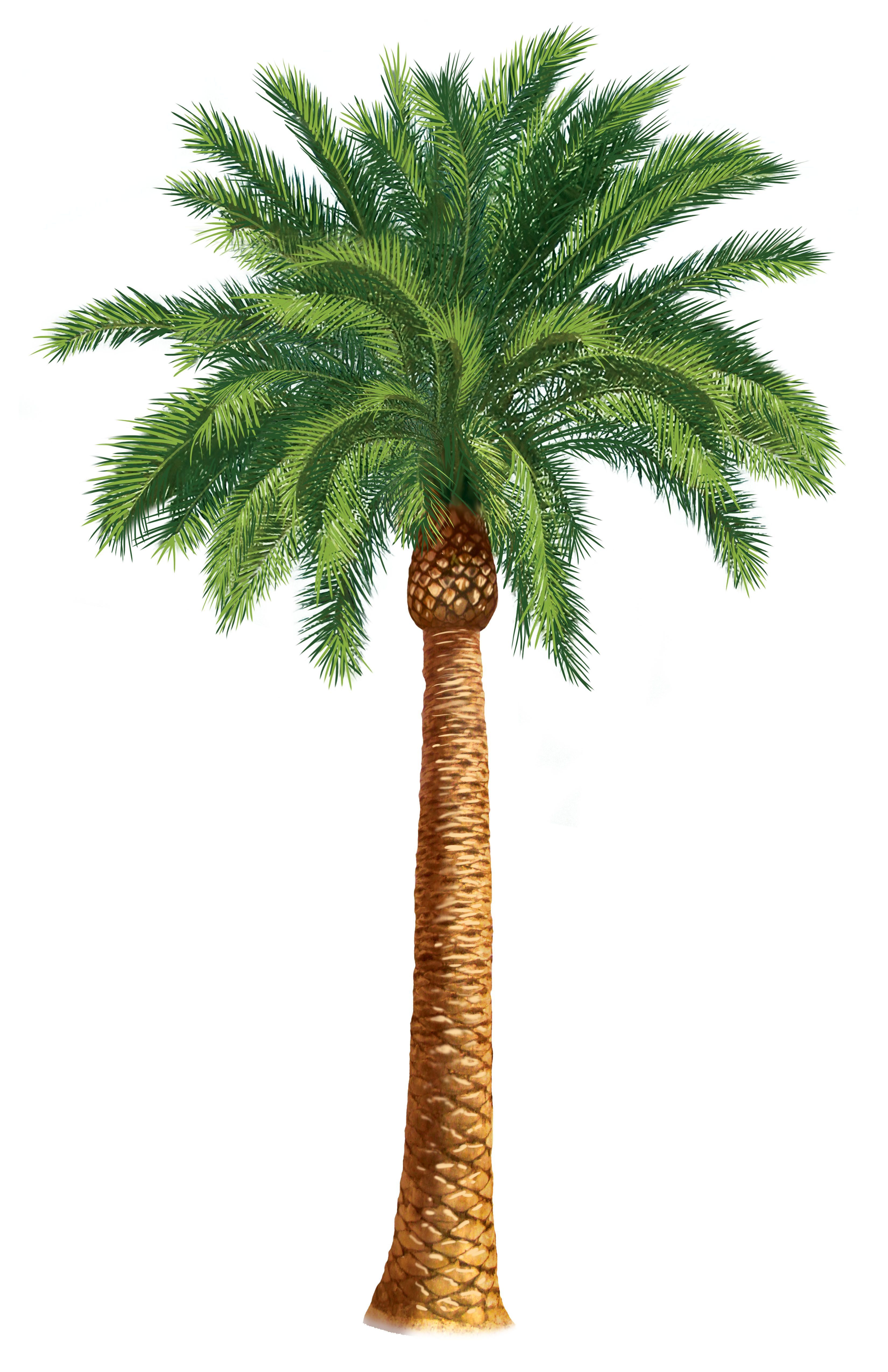Palm Trees Clip Art | Units 5   6 Clipart - The Gospel Project