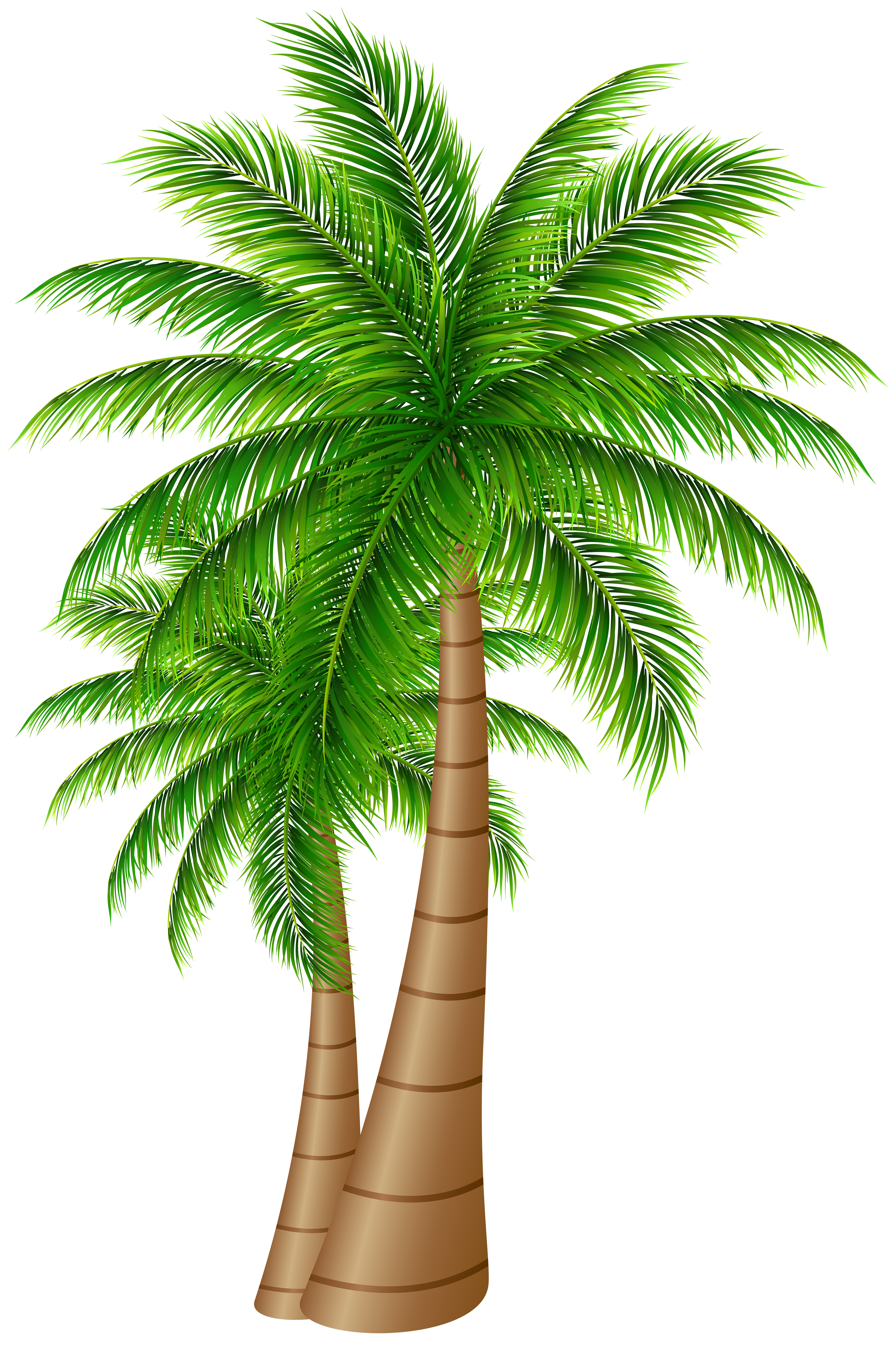 Palm Trees Large PNG Clip Art Image | Gallery Yopriceville - High . ClipartLook.com  transparent