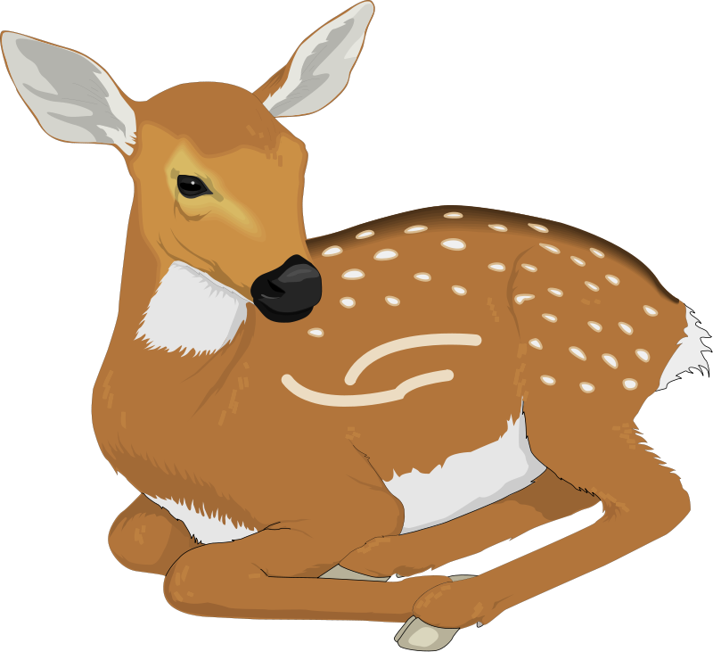 Deer Animal Clipart Pictures Royalty Free Clipart Pictures Org